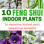 10 Feng Shui Indoor Plants to Spruce Up Your Interior Decor