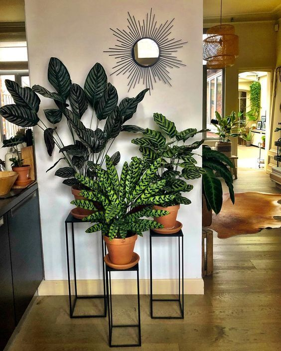 30+ Indoor Decorative Plants To Bring Freshness