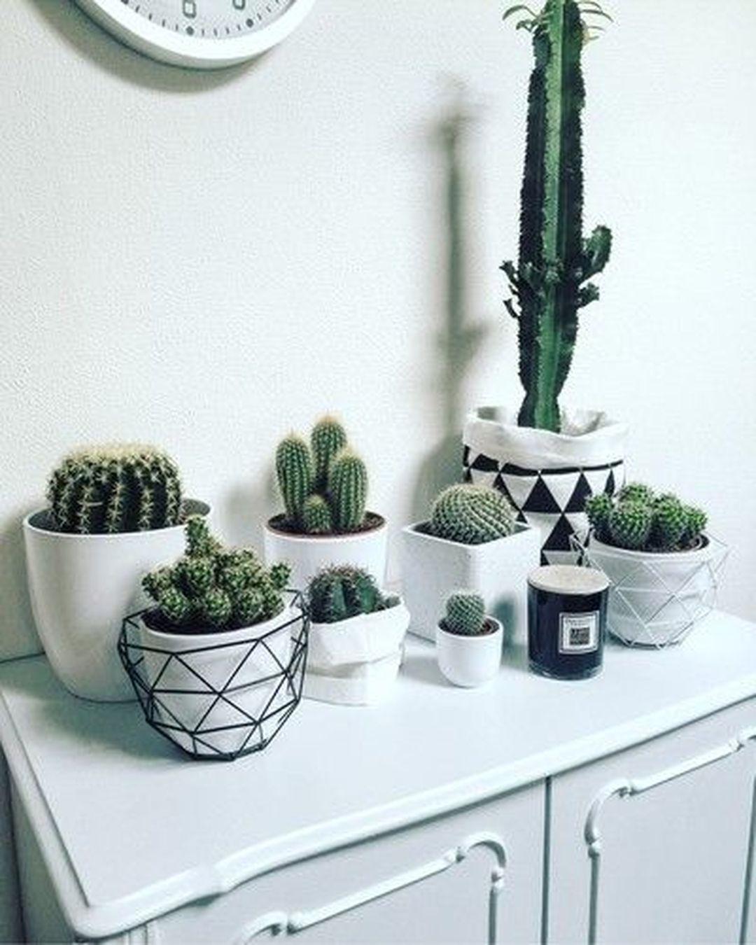 Creative and Beautiful Cactus Room Decor – Decomagz