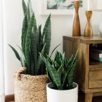 "Large - Mid Century Modern Planter, Plant Stand with Modern Plant Pot, Wood Stand - 12"" Ceramic Pot"