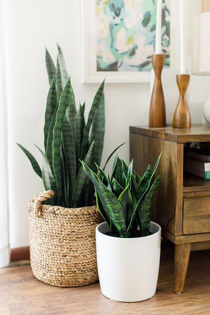 Large – Mid Century Modern Planter, Plant Stand with Modern Plant Pot, Wood Stand – 12″ Ceramic Pot