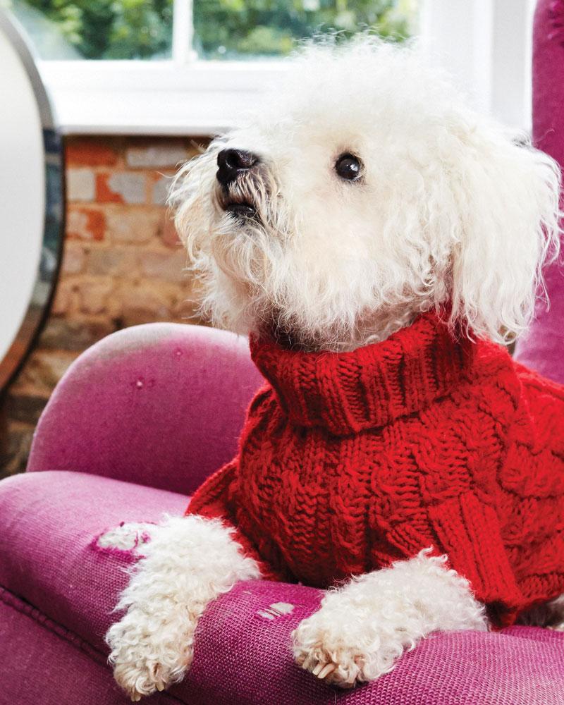 dog jumpers wilmot red dog jumper tjawcej